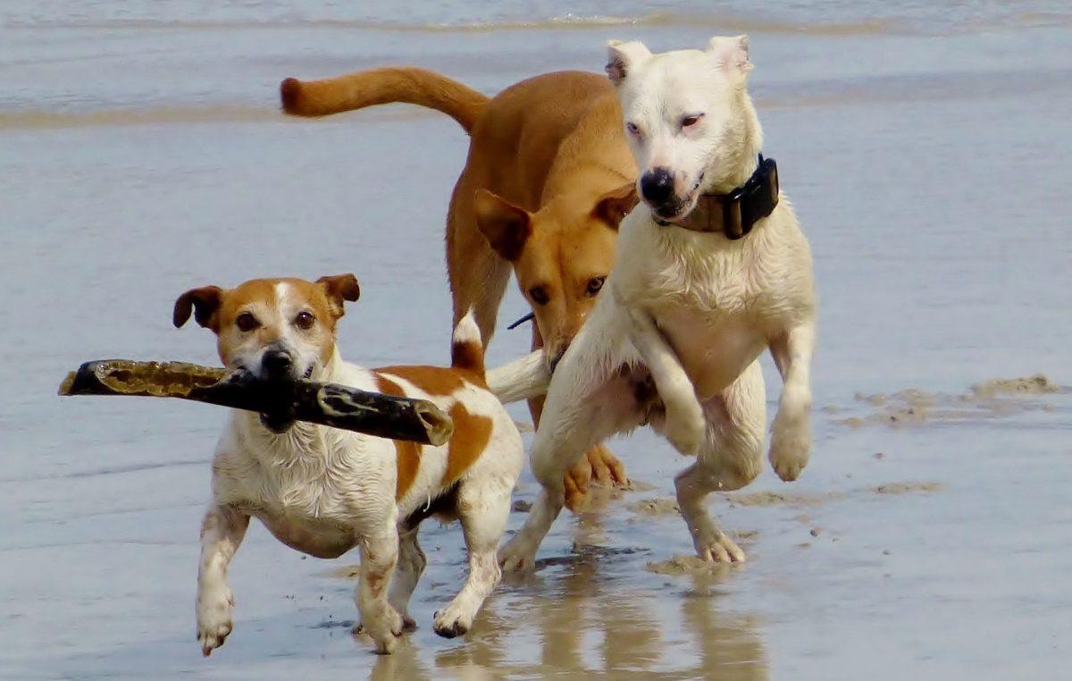Hunde Haftpflicht